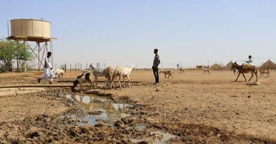 Tecnología nuclear para controlar las epidemias de animales en África y Mongolia
