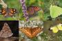 México: estudio sobre seis mariposas migratorias con datos del OIEA